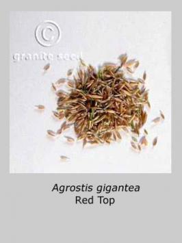 agrostis  gigantea  product gallery #2