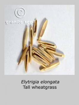 thinopyrum ponticum product gallery #2