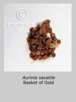 aurinia saxatilis product gallery #2