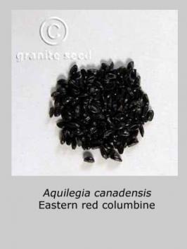 aquilegia canadensis product gallery #2