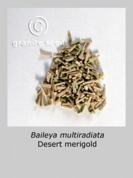 baileya  multiradiata  product gallery #3