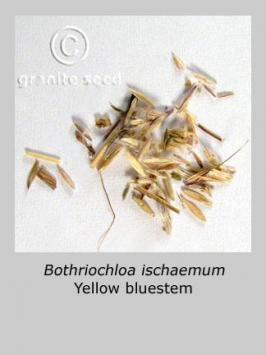 bothriochloa ischaemum product gallery #2