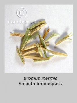 bromus inermis product gallery #3