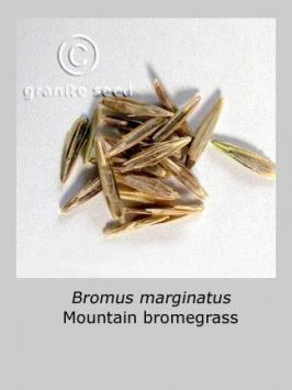 bromus  marginatus  product gallery #4
