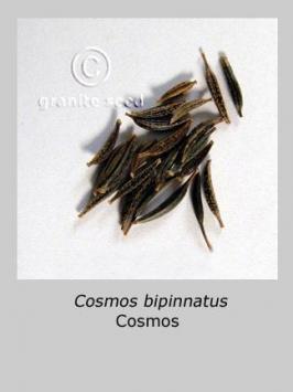 cosmos bipinnatus product gallery #4