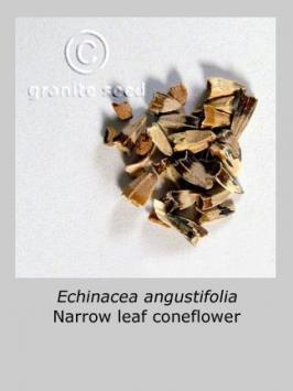 echinacea angustifolia product gallery #3