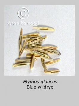 elymus  glaucus  product gallery #2