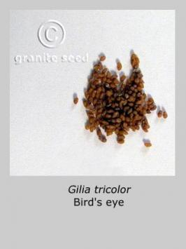 gilia  tricolor  product gallery #1
