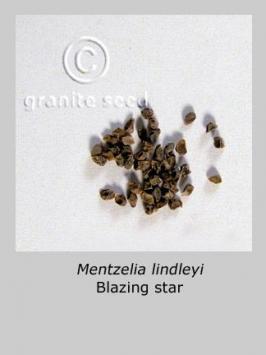 mentzelia  lindleyi  product gallery #2
