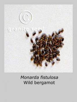 Monarda Fistulosa Granite Seed And Erosion Control