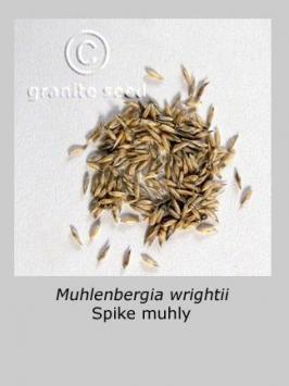 muhlenbergia wrightii product gallery #3
