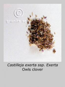 castilleja exserta ssp. exserta product gallery #5
