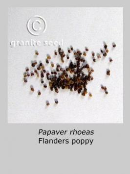papaver rhoeas product gallery #4