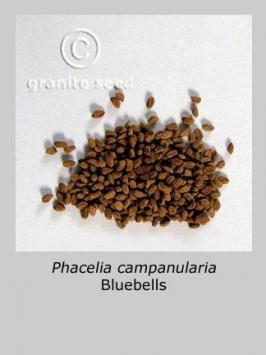 phacelia campanularia product gallery #3