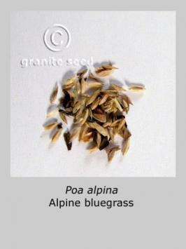 poa alpina product gallery #3