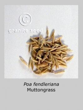poa fendleriana product gallery #3