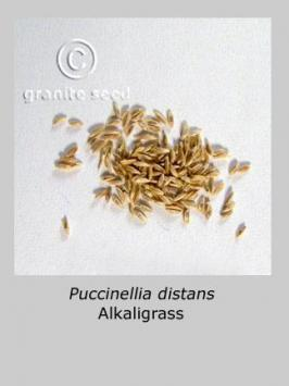 puccinellia distans product gallery #3
