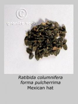 ratibida columnifera product gallery #4