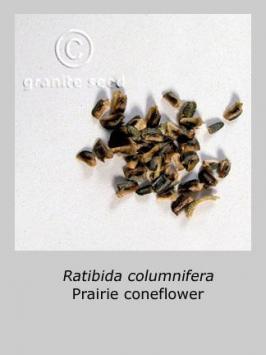 ratibida columnifera product gallery #6