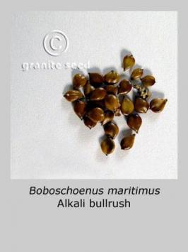 schoenoplectus maritimus product gallery #2