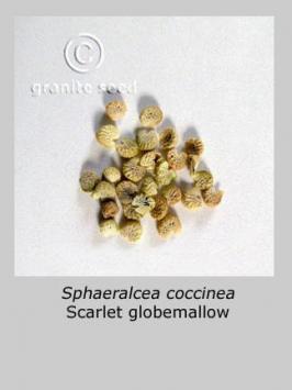 sphaeralcea coccinea product gallery #3