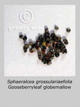 sphaeralcea grossulariifolia product gallery #7