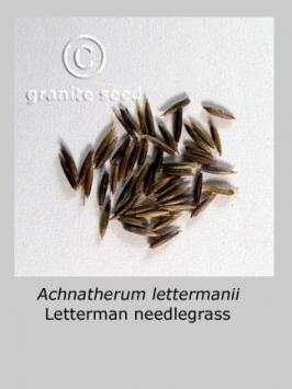 achnatherum  lettermanii  product gallery #6