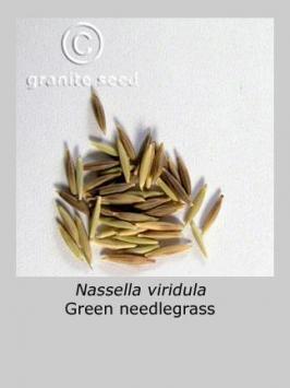 nassella viridula product gallery #4