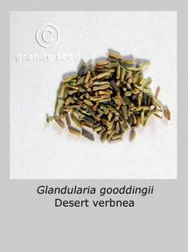 glandularia  gooddingii  product gallery #3