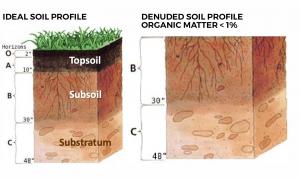 Biotic Soil Media 2