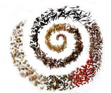 Revegetation & Conservation Seed