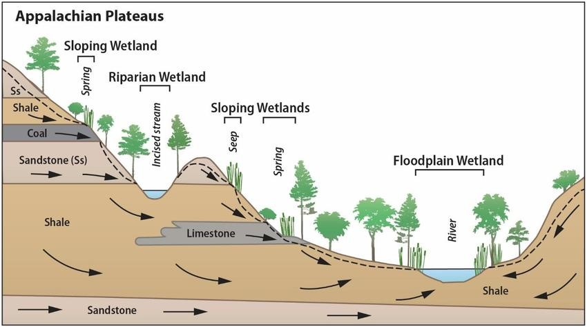 riparian and wetland vegetation diagram