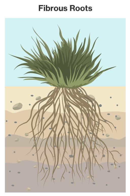 Grass Preventing Erosion Control