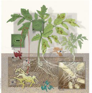 Mycorrhizal Inoculum 1