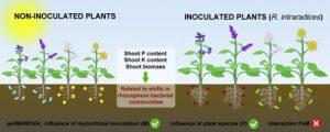 Mycorrhizal Inoculum 2