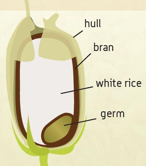 Rice Hulls 1