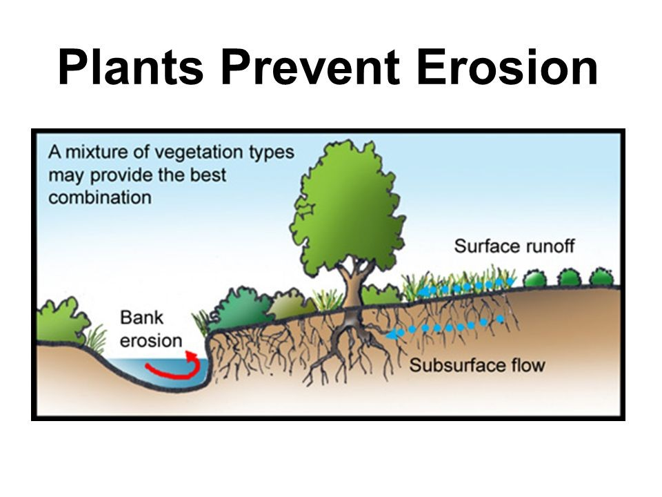 How Do Plants Help Prevent Erosion Control Granite Seed