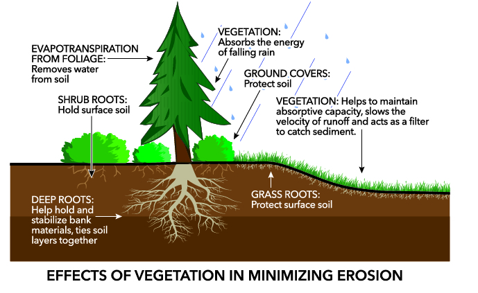 How Trees Stop Erosion 2