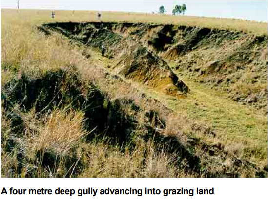 What is the Difference Between Rill and Gully Erosion 3